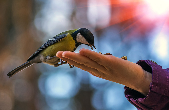 Nurture and conserve rare birds throughout the world